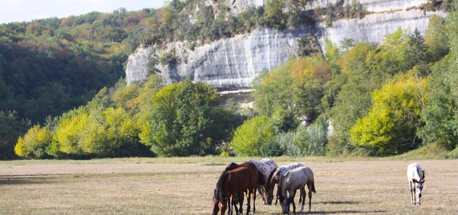 Balades et randonnées à cheval