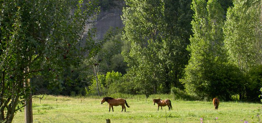 pension à cheval